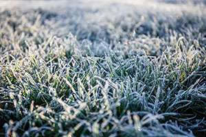 A Quick Guide to Frost Protection