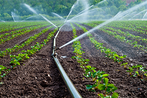 How to Check for Irrigation Leaks