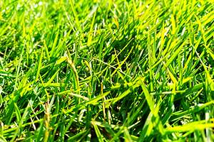How Do I Know Which Grass Type is Right for Me?