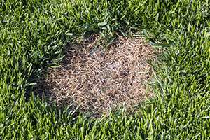 Why is There a Brown Patch on my Lawn?