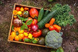 3 Foolproof Tips for Healthy Crops This Summer