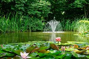 The Do's and Don'ts of Outdoor Garden Ponds